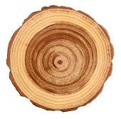 木は曼荼羅