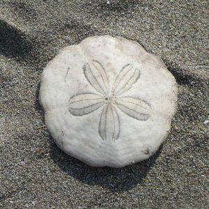 海の曼荼羅