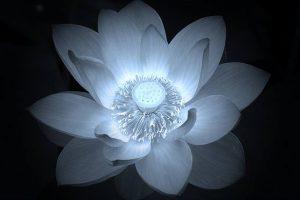 仏教から見た曼荼羅の意味する全てがわかる5選